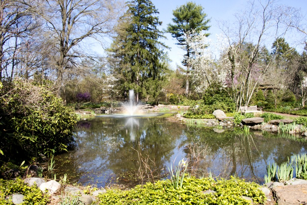 While  Sayen Gardens is a popular spot for weddings and events, the history of it's pollution is in contention. Photo by Dan Asnis.